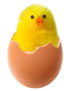 egg-chicken